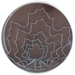 Fox Run Maple Leaf Cookie Cutter Set