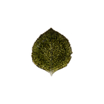Costa Nova Riviera Forets Hydrangea Leaf Bowl, Set of 6