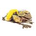 Swissmar Shucker Paddy Yellow Stainless Steel 3 Inch Oyster Knife