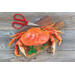 Maine Man Red Stainless Steel Crab Scissors